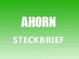 Teaserbild - Ahorn Steckbrief