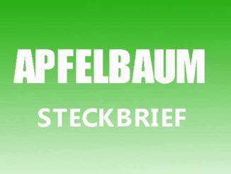 Teaserbild - Apfelbaum Steckbrief