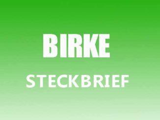 Teaserbild - Birke Steckbrief