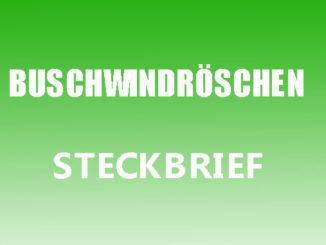 Teaserbild - Buschwindröschen Steckbrief