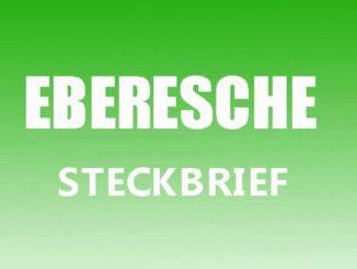 Teaserbild - Eberesche Steckbrief