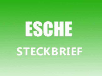 Teaserbild - Esche Steckbrief