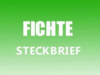 Teaserbild - Fichte Steckbrief