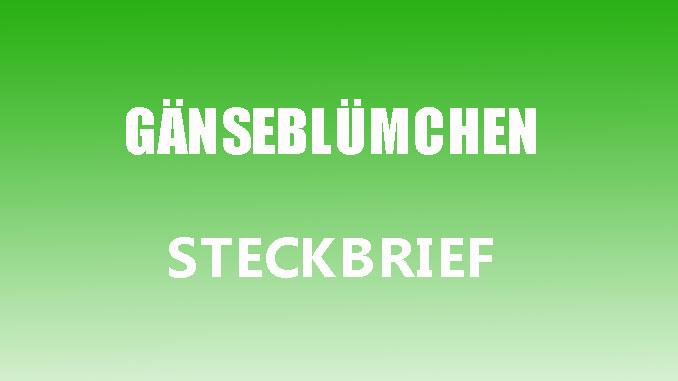 Teaaserbild - Gänseblümchen Steckbrief