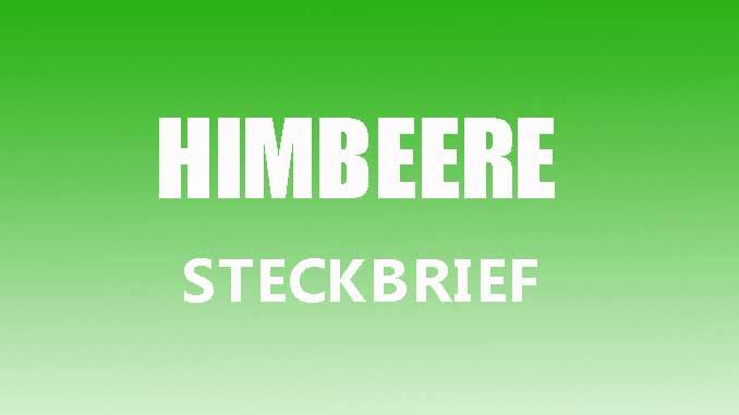 Teaserbild - Himbeere Steckbrief