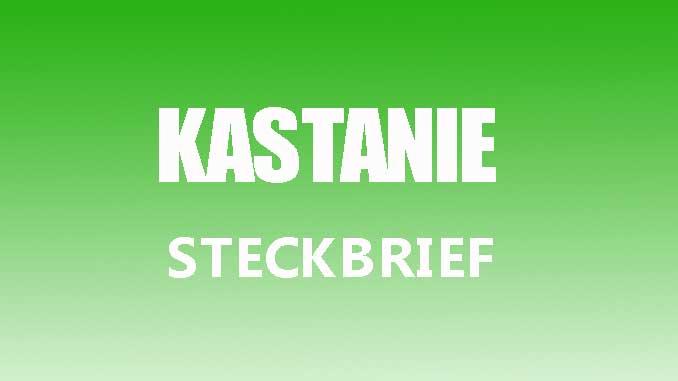Teaserbild - Kastanie Steckbrief