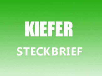Teaserbild - Kiefer Steckbrief