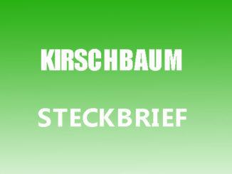 Teaserbild - Kirschbaum Steckbrief