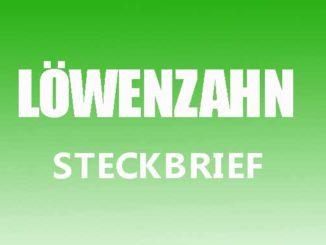 Teaserbild - Löwenzahn Steckbrief