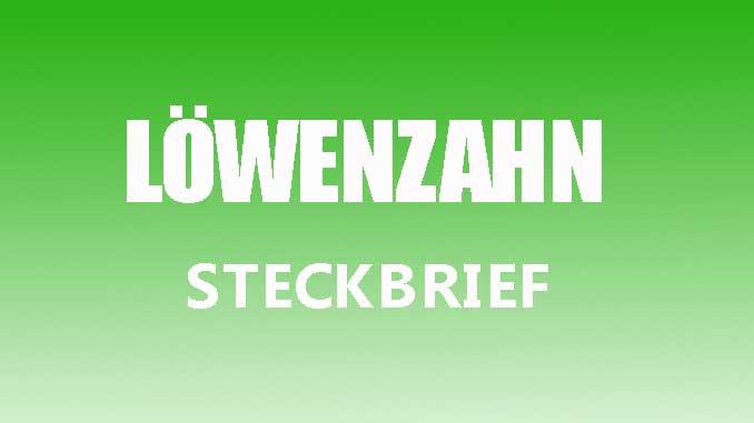 Ganz und zu Extrem Löwenzahn Steckbrief - www.pflanzen-steckbriefe.de &MO_25