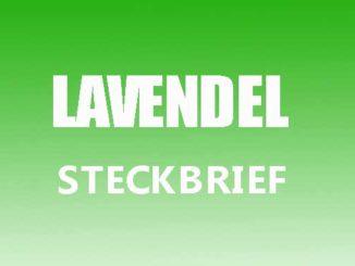 Teaserbild - Lavendel Steckbrief