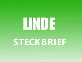 Teaserbild - Linde Steckbrief