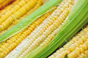 Bild vom Mais