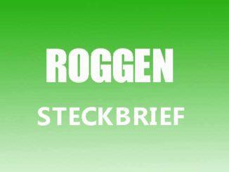 Teaserbild - Roggen Steckbrief