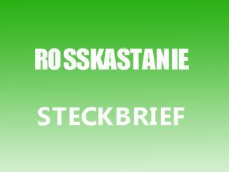 Teaserbild - Rosskastanie Steckbrief
