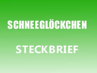 Teaserbild - Schneeglöckchen Steckbrief