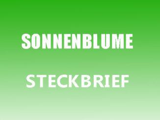 Teaserbild - Sonnenblume Steckbrief