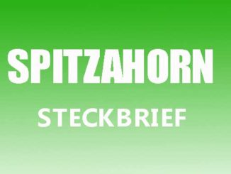 Teaserbild - Spitzahorn Steckbrief