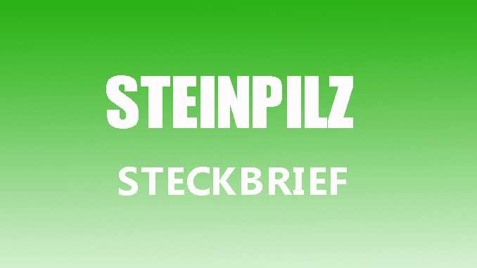 Teaserbild - Steinpilz Steckbrief