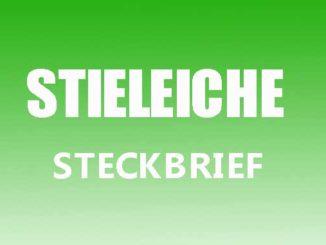 Teaserbild - Stieleiche Steckbrief