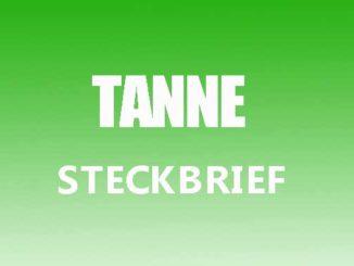 Teaserbild - Tanne Steckbrief