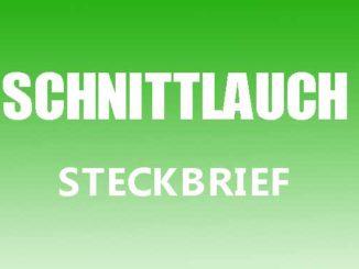 Teaserbild - Schnittlauch Steckbrief