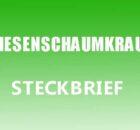 Wiesenschaumkraut Steckbrief