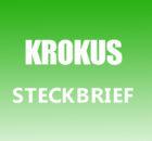Krokus Steckbrief