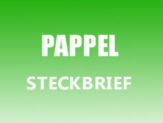 Teaserbild - Pappel Steckbrief