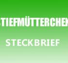 Stiefmütterchen Steckbrief
