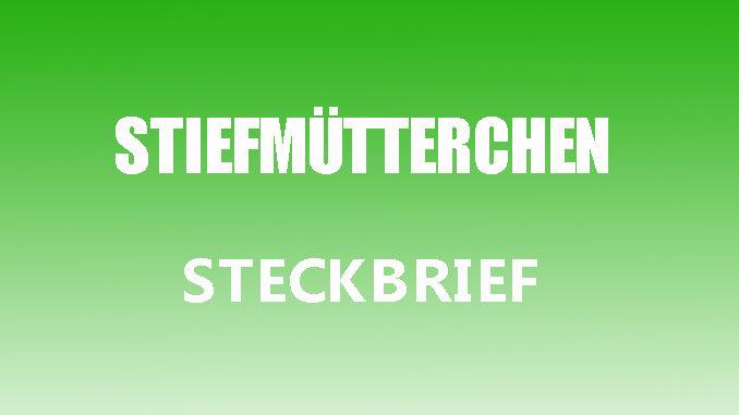 Teaserbild - Stiefmütterchen Steckbrief
