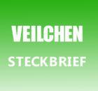 Veilchen Steckbrief
