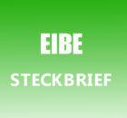 Eibe Steckbrief
