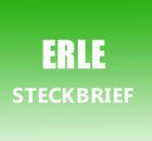Erle Steckbrief