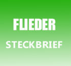 Flieder Steckbrief