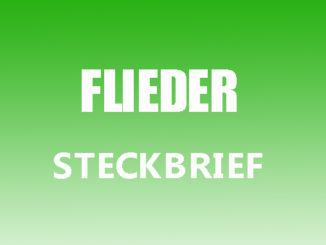 Teaserbild - Flieder Steckbrief