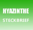 Hyazinthe Steckbrief