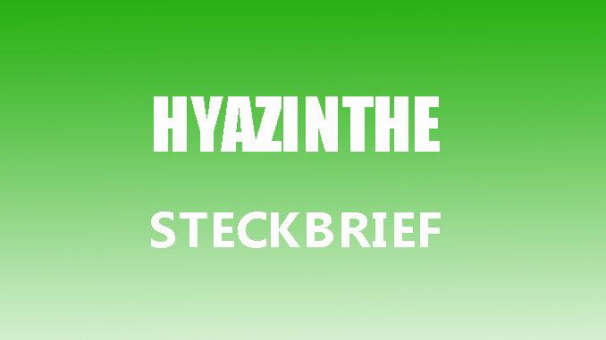 Teaserbild - Hyazinthe Steckbrief
