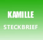 Kamille Steckbrief
