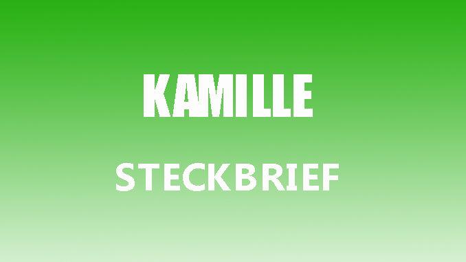 Teaserbild - Kamille Steckbrief