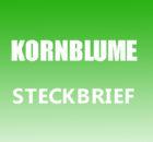 Kornblume Steckbrief