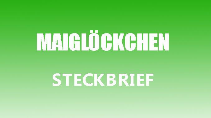 Teaserbild - Maiglöckchen Steckbrief