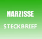 Narzisse Steckbrief