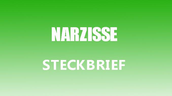 Steckbrief narzisse