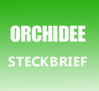 Orchidee Steckbrief