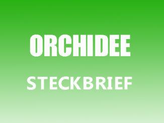 Teaserbild - Orchidee Steckbrief