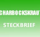 Scharbockskraut Steckbrief