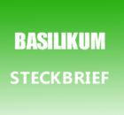 Basilikum Steckbrief