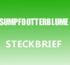 Sumpfdotterblume Steckbrief