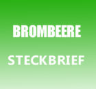 Brombeere Steckbrief